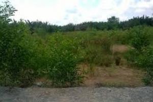 Đất Vị Trí Tốt Tại Thảo Điền Quận 2